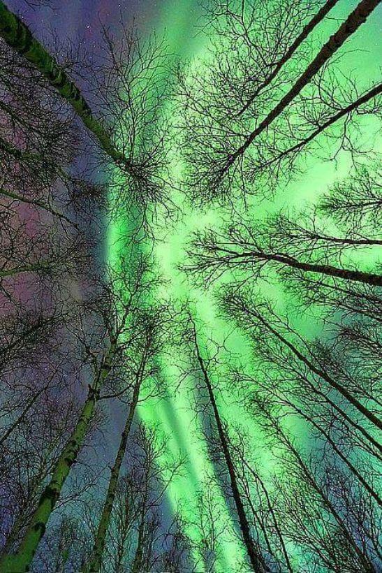 Mágia stromov
